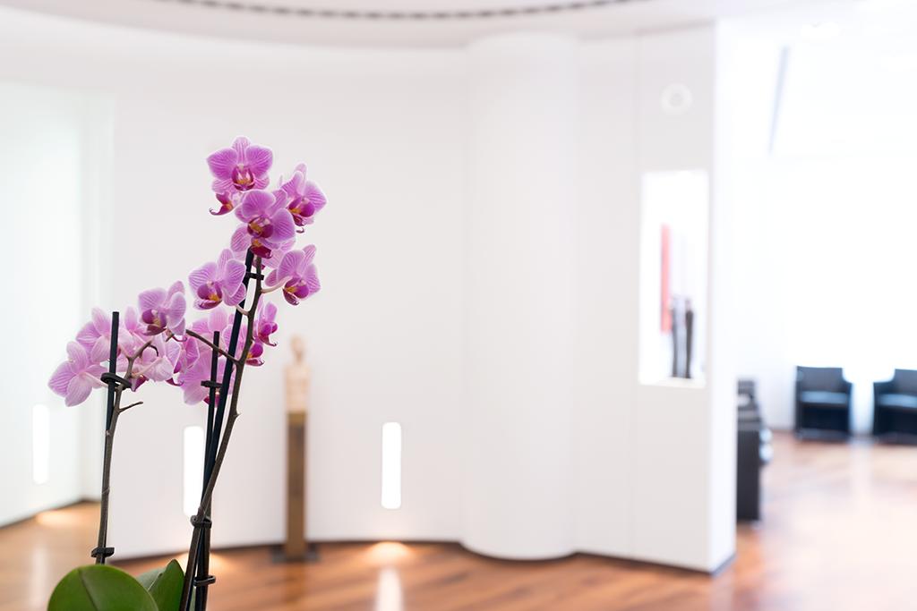 Rosa Orchidee auf dem Empfangstresen im Eingangsbereich der Privatpraxis Osteopathie.Kö.