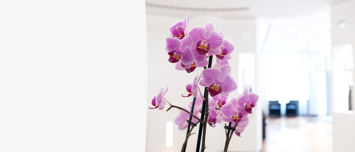 Rosa Orchideen stehen auf dem Empfangstresen der Praxis Osteopathie.Kö. und im Hintergrund sieht man den lichtdurchfluteten Wartebereich mit Stühlen für Patienten/-innen.